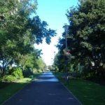 main drive in wellfare park
